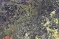 Tiny tadpoles!